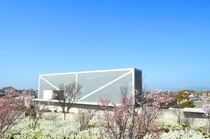 桜と雪柳と狭山池博物館