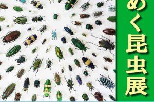 平成30年度夏季企画展「きらめく昆虫展」