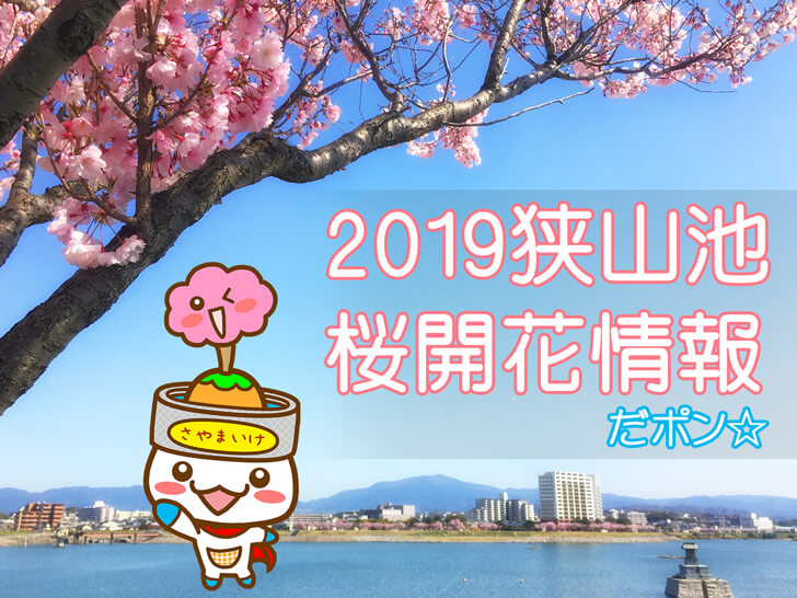「さやポンが発信!」狭山池の桜開花情報2019だポン☆
