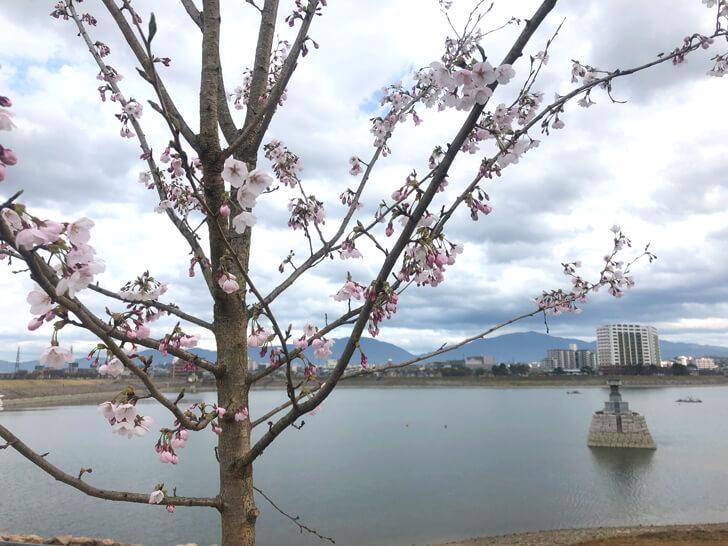 龍神社と桜