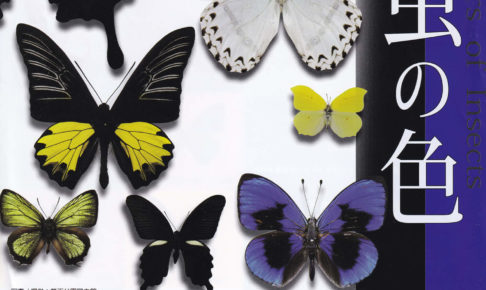 令和元年夏季企画展「昆虫の色」が狭山池博物館にて開催されます