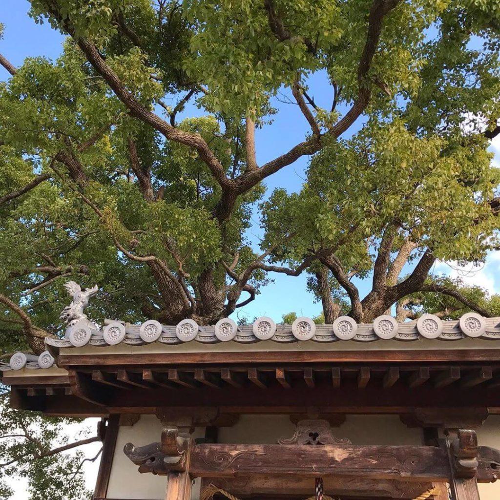 山本地区をお散歩中に「稲荷神社」に寄ってきました (2)