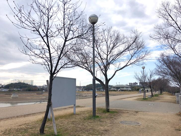 2020-02-13狭山池の桜