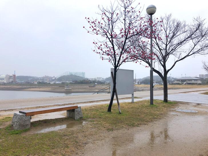 2020-02-29狭山池の桜