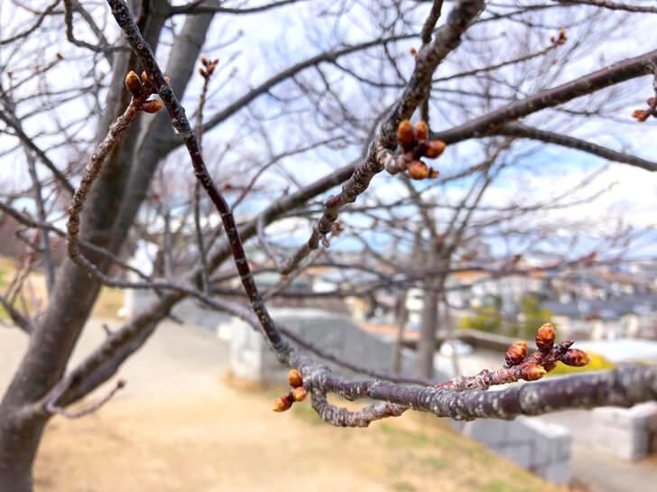2020-01-29狭山池の桜
