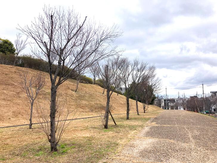 2020-02-26の狭山池の桜