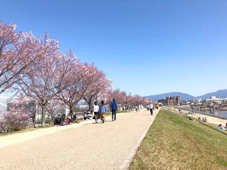 2020-03-25狭山池の桜 (5)