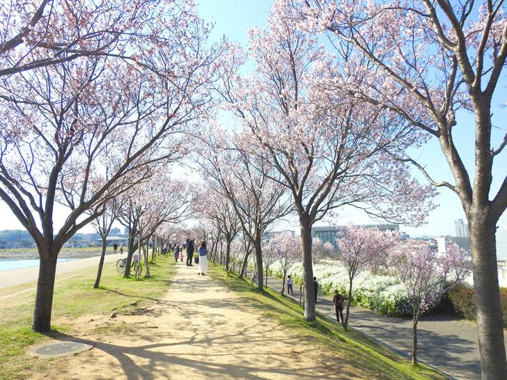 2020-03-25狭山池の桜 (28)