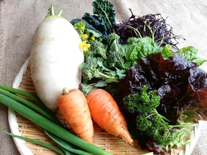 【小さなお子様も安心】旬の無農薬野菜を直売!「笑ノ百姓(えみのひゃくしょう)」 (17)