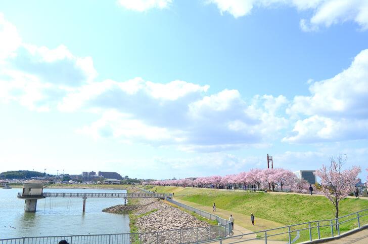 2020-04-02狭山池の桜