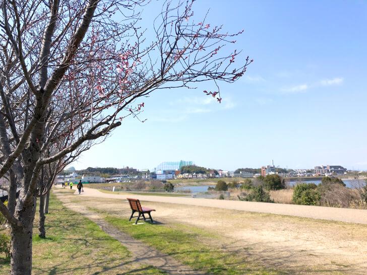 2020-03-17狭山池の桜 (1)