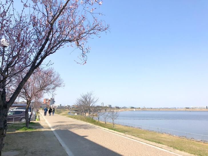 2020-03-17狭山池の桜 (5)