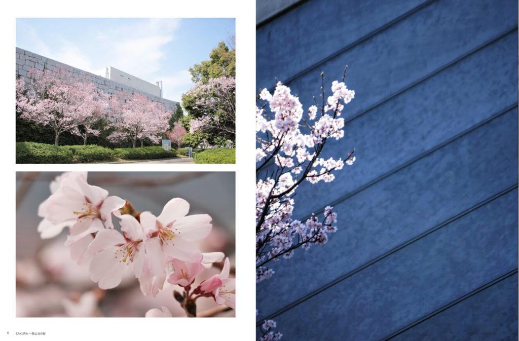 親子写真家ユニット「Photography-to-commune.」が狭山池の桜にスポットを当てた写真集「SAKURA-~狭山池の桜」を好評販売中-(1) (1)