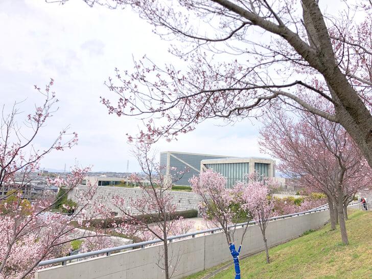 2020-03-22狭山池の桜 (6)