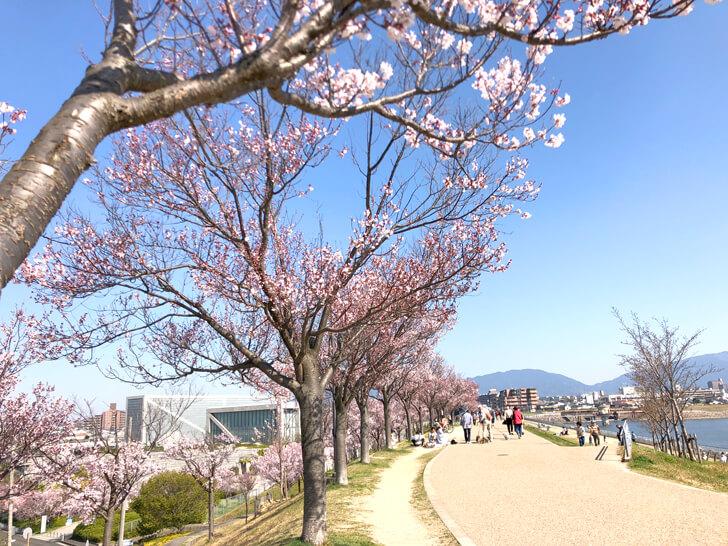 2020-03-25狭山池の桜 (10)