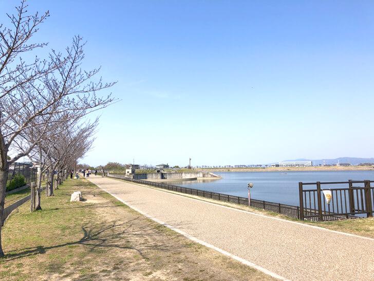 2020-03-17狭山池の桜 (6)
