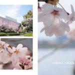 親子写真家ユニット「Photography to commune.」が狭山池の桜にスポットを当てた写真集「SAKURA ~狭山池の桜」を好評販売中 (1)