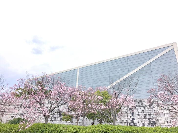 2020-03-22狭山池の桜 (8)