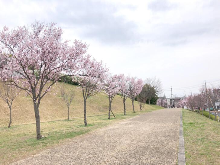 2020-03-22狭山池の桜