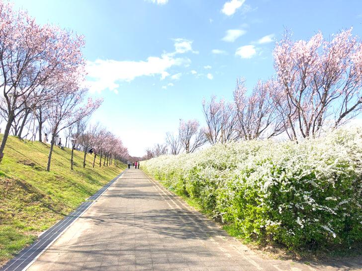 2020-03-19狭山池の桜 (4)
