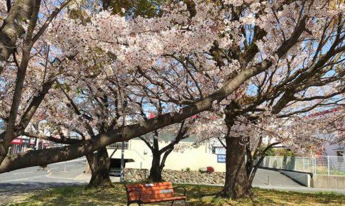 桜の花が散り始め、葉桜も多くなってきましたね (9)