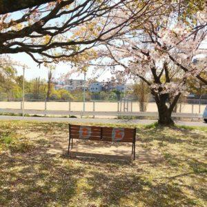 桜の花が散り始め、葉桜も多くなってきましたね (2)