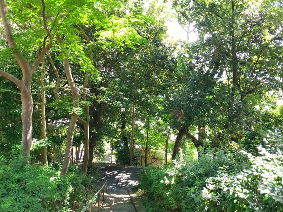 「池之原神社」へお散歩【2020年8月12日】 (4)