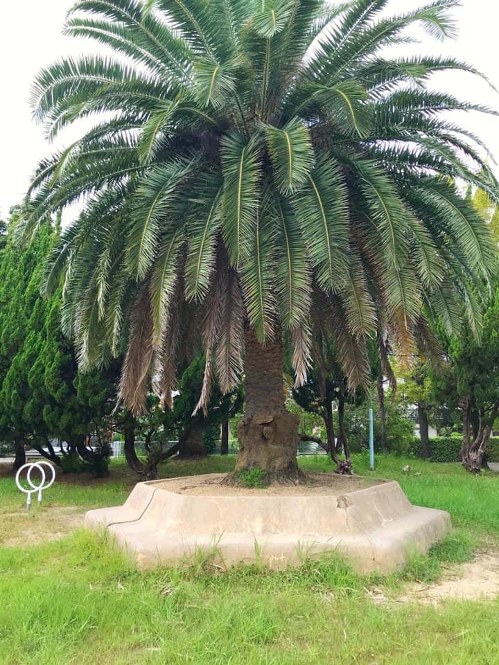狭山ニュータウンにある「西山台第3公園」までお散歩してきました (2)