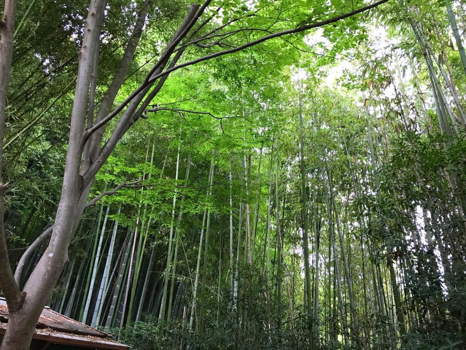 「三都神社」へお散歩【2017年7月23日】 (4)