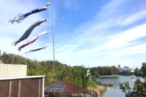 副池オアシス公園に「鯉のぼり」が揚がっていました (1)