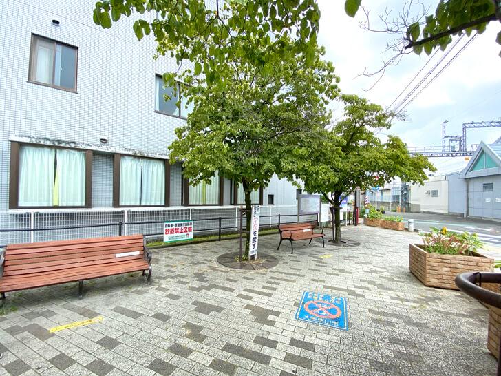 大阪狭山市駅前で「白いハト」を発見しました (9)
