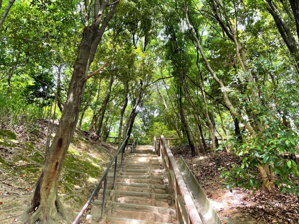 「陶器山通り」と「陶器山トンネル」を散歩してきました (10)